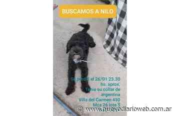 Nilo se perdió en el barrio Villa del Carmen y aún no aparece - Nuevo Diario de Santiago del Estero