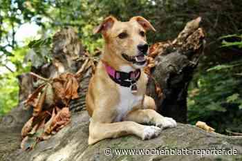 Hundeverein Ramstein informiert: Virtuelle Wander-Spenden-Aktion - Wochenblatt-Reporter