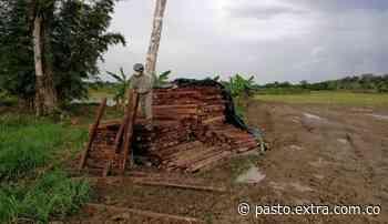 Autoridades incautaron más de mil listones de madera en Puerto Concordia, Meta - Extra Pasto