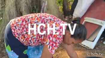 Desalojan a humilde madre soltera en el sector de La Guama, Santa Cruz de Yojoa - hch.tv