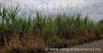 Huatuscohace 55 min . Sequía afecta campos de caña en Paso del Macho - Vanguardia de Veracruz