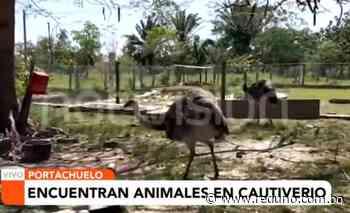 Hallan un criadero clandestino de animales silvestres en Portachuelo - Red Uno de Bolivia