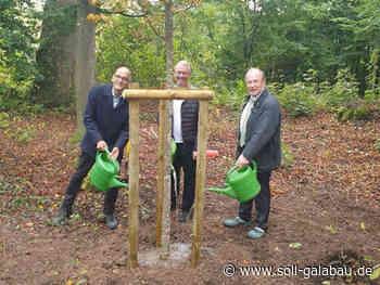 Klimabäume für Baden-Württemberg in Oppenweiler Bernhard Bühler - Beschaffungsdienst GaLaBau