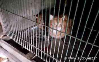 Jugazan (33) : une vingtaine de chats enfermés dans des clapiers à lapin - Sud Ouest