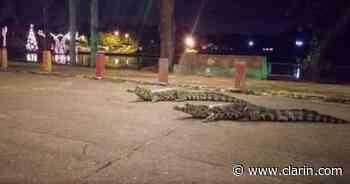 Al desbordarse un lago los caimanes invadieron un shopping en Paraguay - Clarín.com