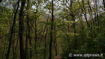 A Crocetta del Montello ea Cornuda associazioni unite per la difesa dell'integrità del bosco di Fagarè - Qdpnews