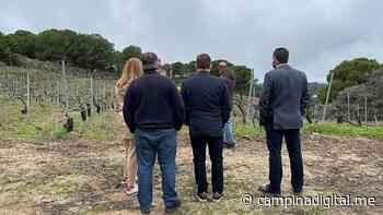 El diputado de Agricultura, Pedro Bruno, visita las Bodegas Viñas Tintas Capellanía de Andújar. - Campiña Digital
