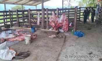 Desmantelado matadero clandestino de ganado en Saladoblanco - Noticias