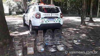 Polícia Ambiental apreende 31 aves mantidas em cativeiro em Cachoeira Paulista - Vale News