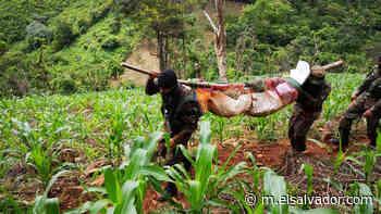 Asesinan a dos soldados en Guatajiagua, Morazán | Noticias de El Salvador - elsalvador.com - elsalvador.com