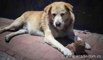 Alcalde de Ubaté pidió sacrificar a los perros callejeros - W Radio