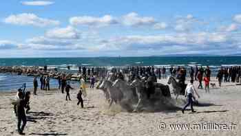 Le Grau-du-Roi : l'abrivado des plages prévue le 6 mars annulée - Midi Libre