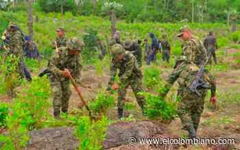 Denuncian enfrentamientos de campesinos y Fuerza Pública en Anorí - El Colombiano