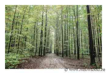 Overijse betaalt per vergissing aanplanting bomen op Brussels grondgebied