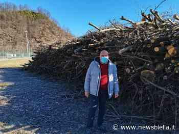 Crevacuore, pulizia degli alvei al termine: raccolti oltre 500 quintali di legname - newsbiella.it