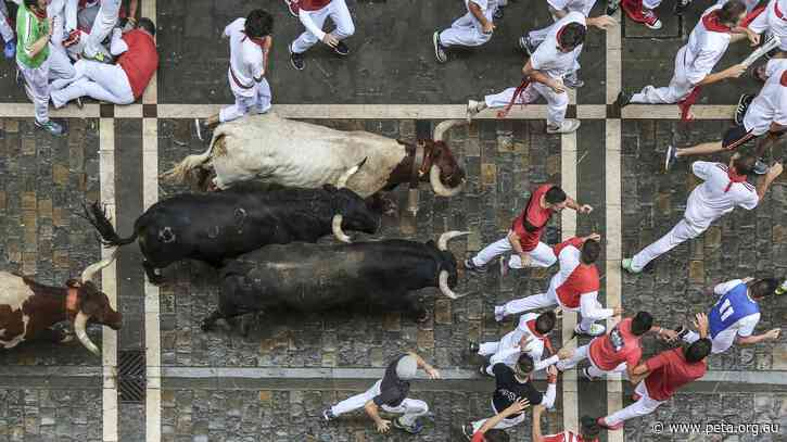 Running of the Bulls Cancelled Again; Bulls Spared a Bloody Death