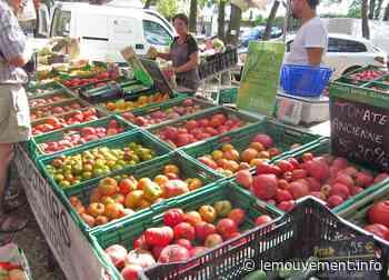 VOIR AUSSI : Clapiers : Annulation du Festival de la Tomate 2020 - lemouvement.info