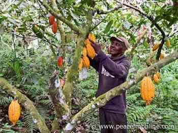 COVID -19: Cocoa Farmers At Kusa Receive PPEs | General News | Peacefmonline.com - Peace FM Online