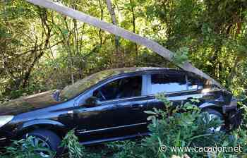 SC 355: Carro sai da pista e derruba poste em Fraiburgo - Caçador Online