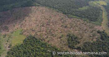 Capturan a cuatro de los principales deforestadores de Mapiripán (Meta) - Semana