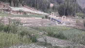 Comunarios de Betanzos claman ayuda tras fuerte granizo que destruyó cultivos - Red Erbol