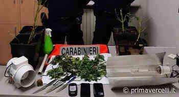 Saluggia, coltivava marijuana in casa: denunciato - Prima Vercelli