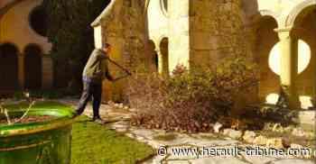 VILLEVEYRAC - Le mois de Février à l'Abbaye de Valmagne - Hérault-Tribune