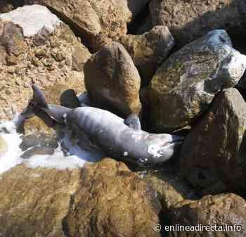 Encuentran tonina flotando en el río Panuco - EnLíneaDirecta.info