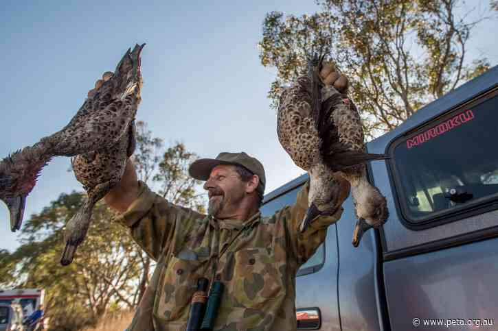 Slaughter for 'Sport': 2021 Duck-Hunting Season Approved