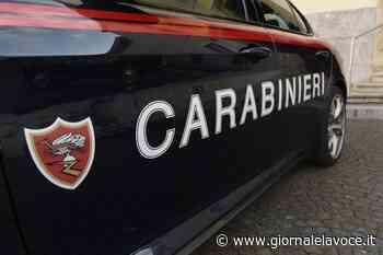 SALUGGIA. Per nascondere la marijuana aizza tre cani contro i carabinieri - giornalelavoce