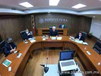 Agricultura creció 3% pesé a pandemia: Víctor Villalobos - La Jornada