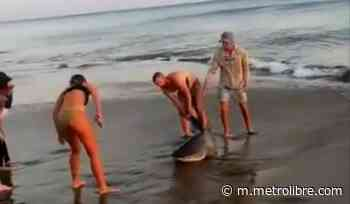 Liberan a tiburón que quedó atrapado con un anzuelo en Pedasí - Metro Libre