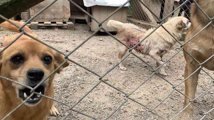 Cuidadora de cães é presa suspeita de maus-tratos, em Quatro Barras; cerca de 80 animais são resgatados - G1