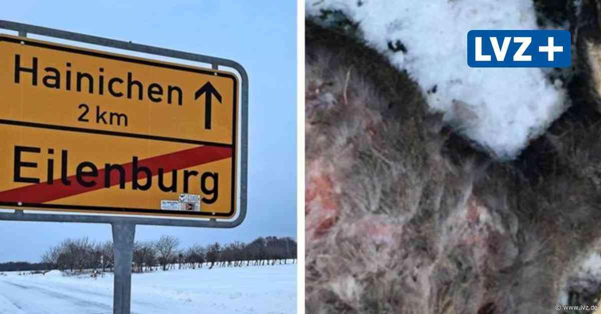 Eilenburg: Hund jagt Rehkitz und beißt es tot - Leipziger Volkszeitung