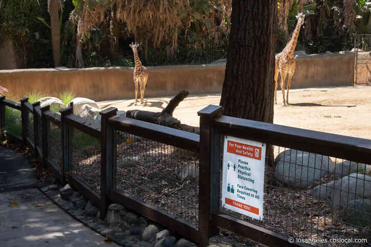 LA Zoo To Reopen In Mid-February