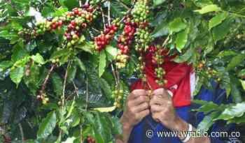 Valle de Tenza en Boyacá exporta toneladas de café a Croacia y China - W Radio