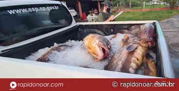 PM Ambiental flagra grande quantidade de garoupa armazenada em freezer em Iguape - Rápido no Ar