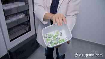 Angatuba recebe doses extras de vacina contra Covid após fusível de geladeira queimar - G1