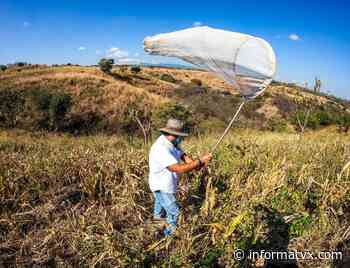 Verifican cultivos en San Juan Opico como medida de prevención por la plaga de la langosta voladora que amenaza la región - InformaTVX - Noticias El Salvador