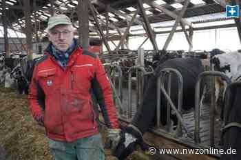 Nach Feuer in Uplengen: Eine Kuh überlebt die Brandnacht nicht - Nordwest-Zeitung