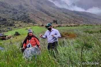 Brigadas agrarias capacitan en manejo de pastos y papa nativa en Satipo - Agencia Andina
