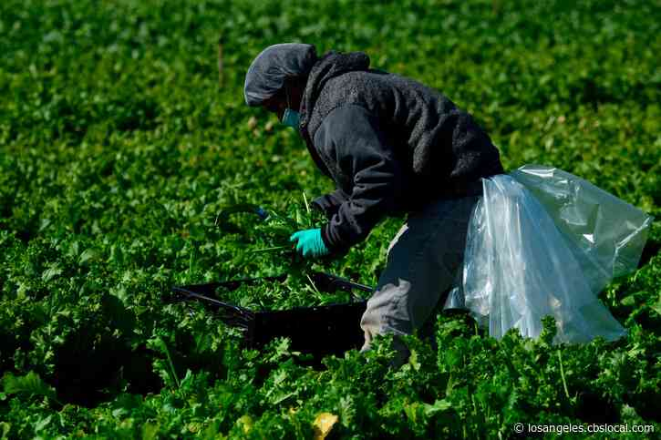 City Of Coachella Approves $4 Hero Pay For Farm Workers