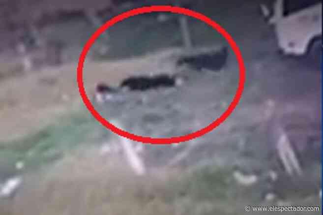 Video: Tres perros callejeros atacaron a niña, de cuatro años, en Ubaté, Cundinamarca - El Espectador