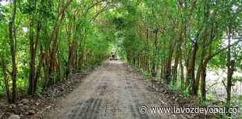 Mejoramientos de vías en Hato Corozal - Noticias de casanare | La voz de yopal - La Voz De Yopal