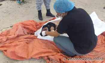 Hallan cadáver de una mujer en Montecristi; había salido hacia Bahamas en embarcación hace 5 días - Red De Noticias