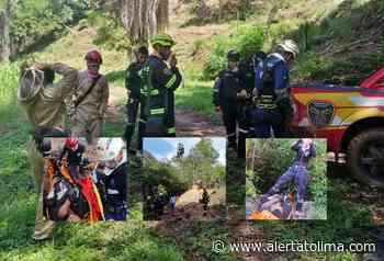 Rescataron 6 personas que fueron atacadas por un enjambre de abejas - Alerta Tolima