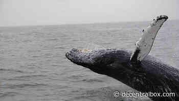 Whale-Alarm: Bitcoin im Wert von 318 Mio. Dollar an unbekannte Wallet geschickt - Decentralbox
