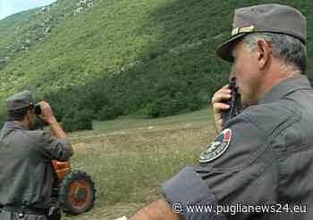 Avvistata pantera ad Acquaviva delle Fonti, pattugliamenti dei carabinieri forestali - Puglia News 24