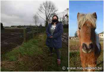 """Gestolen miniatuurpaardjes zijn teruggevonden, maar na maanden nog steeds niet bij eigenares Inès: """"Ik moet toch niet betalen voor mijn gestolen paard?"""""""