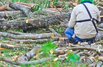 Capturados sujetos dedicados a dañar un bosque en Filandia - El Quindiano S.A.S.